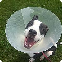 Adopt A Pet :: Xena - Milwaukee, WI