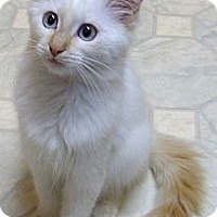 Adopt A Pet :: Taffy - Bedford, MA