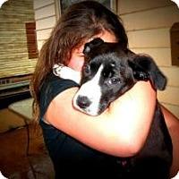 Adopt A Pet :: Vivian - Hancock, MI