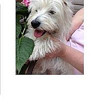 Adopt A Pet :: Shelby - GARRETT, IN