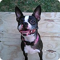 Adopt A Pet :: Nilla - Cumberland, MD