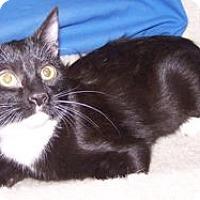 Adopt A Pet :: Carly - Colorado Springs, CO