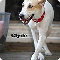Adopt A Pet :: Clyde - Alpharetta, GA