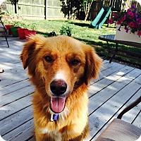 Adopt A Pet :: Franklin - Yorktown, VA