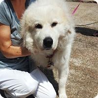 Adopt A Pet :: Whisper - Kyle, TX