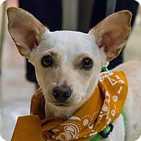 Adopt A Pet :: Daisy 2 - Grass Valley, CA