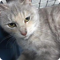 Adopt A Pet :: Leia - Lincolnton, NC