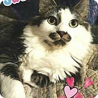 Adopt A Pet :: Jose - Harrisburg, NC