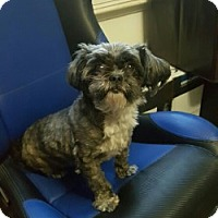 Adopt A Pet :: SADIE - Gustine, CA