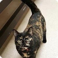 Adopt A Pet :: Trudy - Fresno, CA