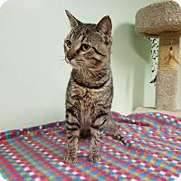 Adopt A Pet :: Mordin - Murphysboro, IL