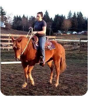 Quarterhorse Mix for adoption in Kingston, Washington - FAVOR