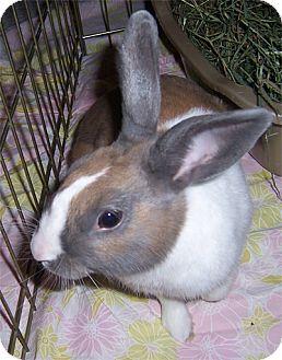 Dutch for adoption in San Clemente, California - TAHITI