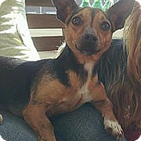 Adopt A Pet :: Nana (Courtesy Post) - Malaga, NJ