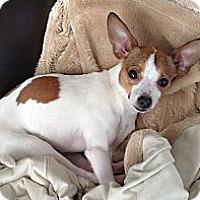 Adopt A Pet :: Gizmatron - Hamilton, ON