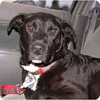 Adopt A Pet :: Midge - Portland, OR