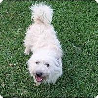 Adopt A Pet :: frazier - houston, TX