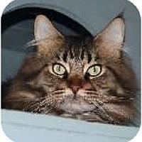 Adopt A Pet :: Keith - Palmdale, CA