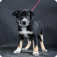 Adopt A Pet :: Cupcake - Nuevo, CA