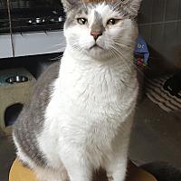 Adopt A Pet :: Latte - Pasadena, CA