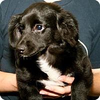 Adopt A Pet :: Todd - Erwin, TN