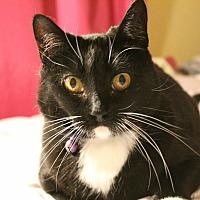 Adopt A Pet :: Braelyn - Santa Ana, CA