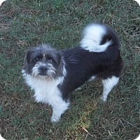 Adopt A Pet :: Roxanne-in CT - Manchester, CT