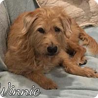 Adopt A Pet :: Winnie - Mobile, AL