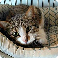 Adopt A Pet :: Andrina - Jefferson, NC