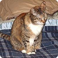 Adopt A Pet :: Embers-petit beauty - Scottsdale, AZ