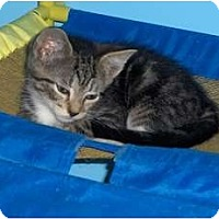 Adopt A Pet :: Bianca - Richmond, VA