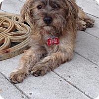 Adopt A Pet :: ARCHIE - W. Warwick, RI