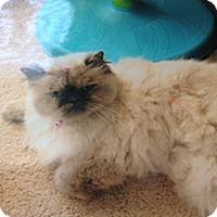 Adopt A Pet :: Suzie - Laguna Woods, CA