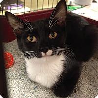 Adopt A Pet :: Kissy - Monroe, GA