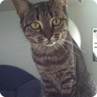 Adopt A Pet :: Scarlett - Hamilton, ON