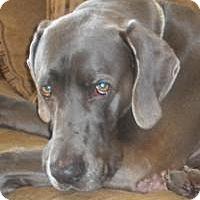 Adopt A Pet :: Winston - Sun Valley, CA