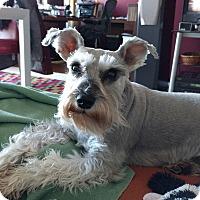 Adopt A Pet :: Pepper Ann - Laurel, MD