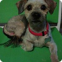 Adopt A Pet :: Charlie 1 - Las Vegas, NV