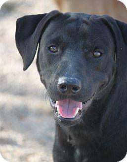 Labrador Retriever Mix Dog for adoption in Cranston, Rhode Island - Brogan