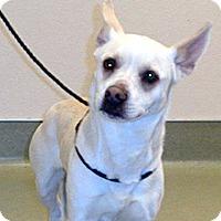 Adopt A Pet :: Sierra - Wildomar, CA