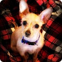 Adopt A Pet :: Canela - Tijeras, NM