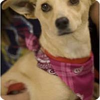 Adopt A Pet :: Lexie - Arlington, TX