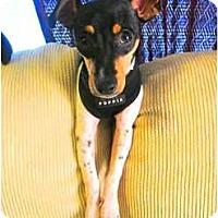 Adopt A Pet :: Sadie - Jacksonville, FL