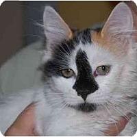 Adopt A Pet :: Dalia - Modesto, CA