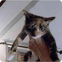 Adopt A Pet :: Kiki - Jenkintown, PA