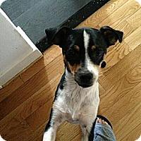 Adopt A Pet :: Bella Luna - Burbank, CA