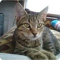 Adopt A Pet :: EK - Lantana, FL
