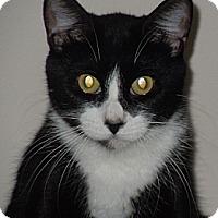 Adopt A Pet :: Daisy - Jacksonville, NC