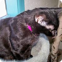 Adopt A Pet :: Tara - Scottsdale, AZ