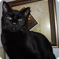 Adopt A Pet :: Bubba - Salem, OR